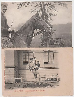 Lot 2 Cpa chevaux