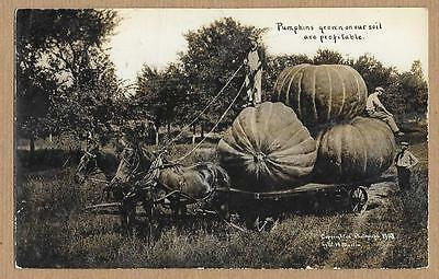 Exaggerated~Pumpkins grown on our soil are profitable~WH Martin RPPC~Beach ND j