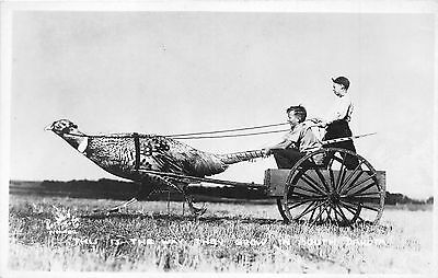 "Exaggerated Pheasant Pulling Boys in Wagon ""Way They Grow in South Dakota""~RPPC"