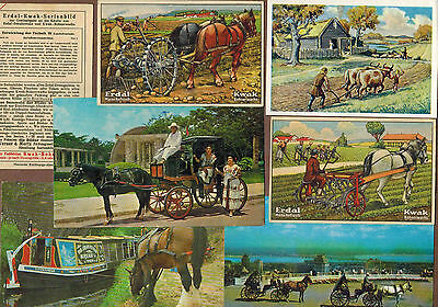 DRAFT ANIMALS, FARMING: Collection of Scarce Antique Cards (1928)