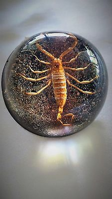Vintage Lucite Scorpion Paper Weight Gold Poison Insect Collectable