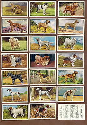 DOGS: Collection of 47 Scarce British GALLAHER Tobacco Cards (1936)