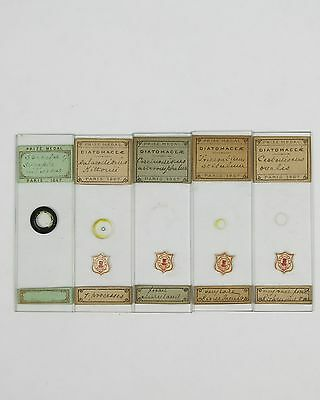 5 x RARE ANTIQUE DIATOM MICROSCOPE SLIDES by A.C.COLE with COLE DEUM LABELS
