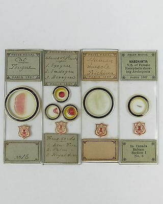 4 x ANTIQUE MICROSCOPE SLIDES by A.C.COLE with COLE DEUM LABELS prize medal 1867