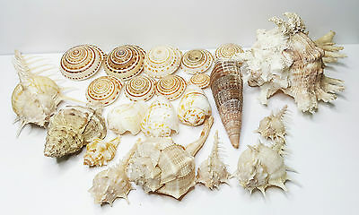 Mixed  Natural Sea Shells