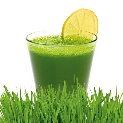 Wheatgrass Powder Organic detox, weight loss, 25g to 2 kg