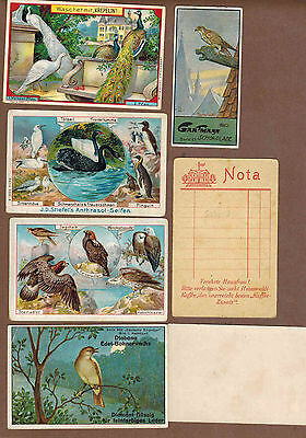 BIRDS: Collection of RARE Victorian Trade Cards from GERMANY (1900)S