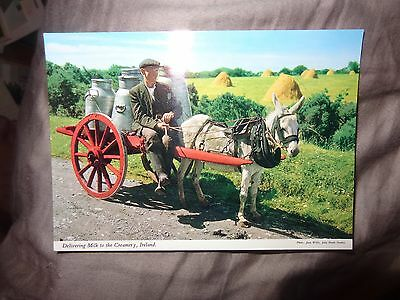 Ireland John Hinde  Post Card  2/17 Delivering Milk To The Creamery Donkey 1-99