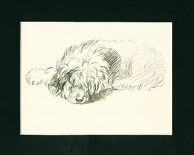 Dog Print 1937 Old English Sheepdog relaxing by Lucy Dawson VINTAGE