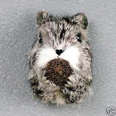 SQUIRREL HEAD-Fur Magnets.  SUPPORT OUR UNWANTED PETS PROGRAM!