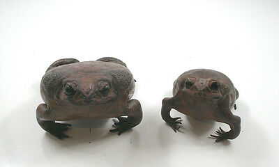 Taxidermy Stuffed Toad Frog Pair