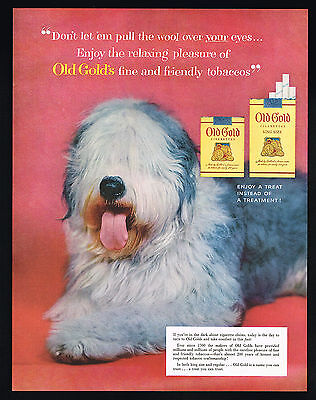 1954 Old English Sheepdog Photo Old Gold Cigarettes Vintage Print Ad