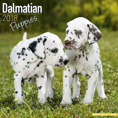 Dalmatian Puppies Wall Calendar 2018 by Avonside