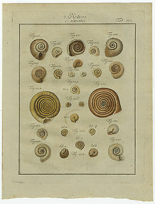 Antique Print-HELIX SHELLS-HELICES-PLANORBES-COLOURED-P127-Martini-Chemnitz-1786