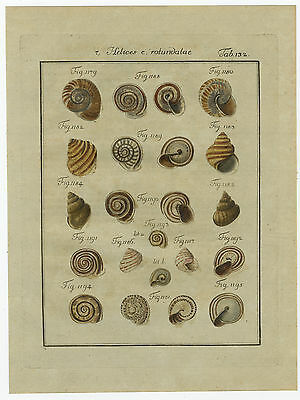Antique Print-HELIX SHELLS-HELICES-COLOURED-PLATE 132-Martini-Chemnitz-1786