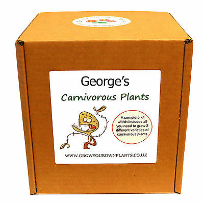 Grow Your Own Personalised Carnivorous Plants Kit - Unusual Gardening Gift