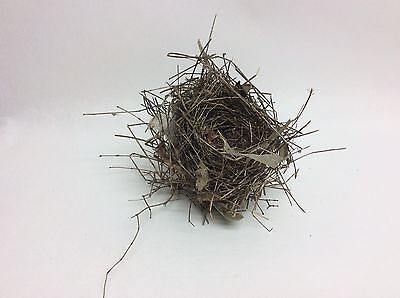 Authentic BIRD'S NEST FINCH Real SE PA Abandoned Bird Used Some Plastic