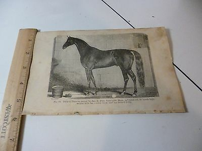 Antique 1870 Draco Prince Horse Trotter Engraving Images from Farmer's Book