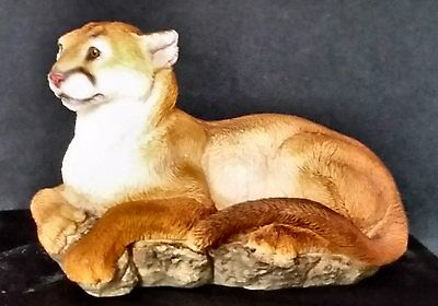 Mountain Lion Resting on Rocks by United Design