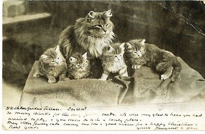 Antique 1902 postcard of a Cat and 4 Kittens