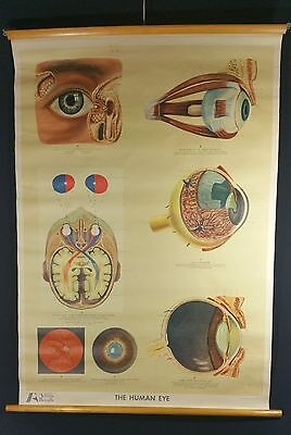 Vintage Retro EYE Anatomical Medical Adam Rouilly Pull Down Chart Poster Large