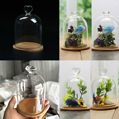 Glass Display Bell Jar Dome With Wooden Base DIY Transparent Christmas Decor