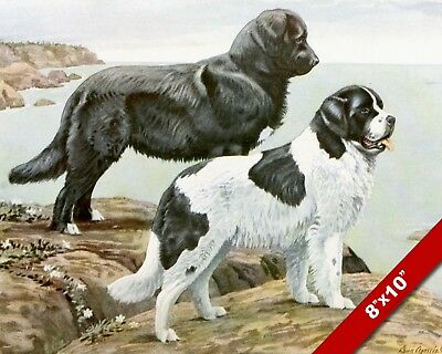 Noble & Gentle Newfoundland Dogs Dog Portrait Art Painting Print On Real Canvas