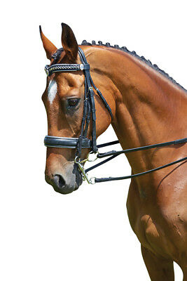 COLLEGIATE DRESSAGE WEYMOUTH SHOW BRIDLE in Black/Clear, Brown/Gold