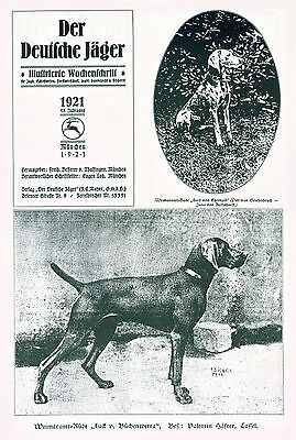 German Dog Book History WEIMARANER Dogs with Great Old Weimaraner Pictures RARE
