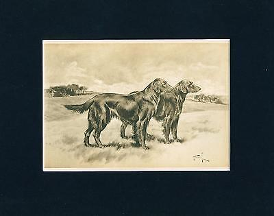 Dog Print 1897 Flat Coated Retriever Dogs by Arthur Wardle ANTIQUE
