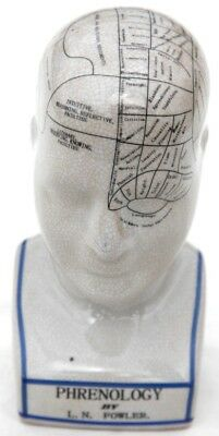 Large 23cm Phrenology Head
