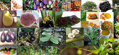 Edibles or palms, walking stick, Jelly, figs, Brazil cherry & others. All Plants