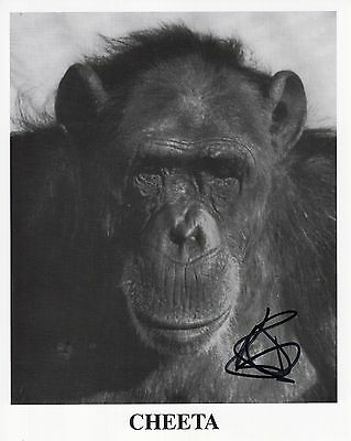 """CHEETA """"autographed"""" 8x10 photo      ADORABLE CHIMP FROM OLD TARZAN MOVIES"""