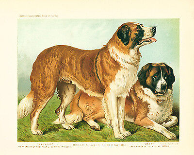 Dog Print 1881 Saint St Bernard Dogs ANTIQUE Chromolithograph