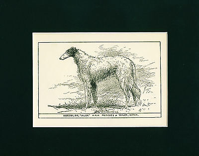 Dog Print 1900 Champion Russian Borzoi Dog ANTIQUE