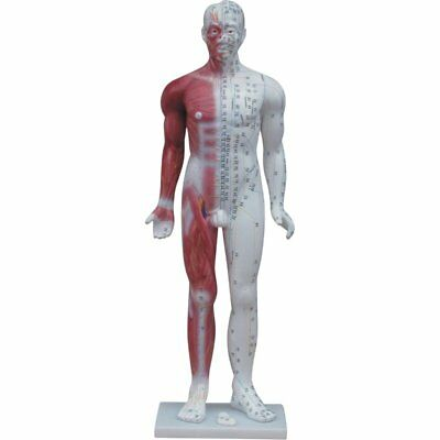 Male Acupuncture Model - EXTRA LARGE 84cm!