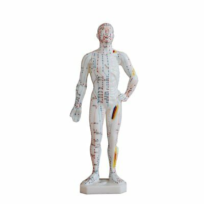 Human body model 26cm. Shows 360 acupuncture points and 14 meridian lines.