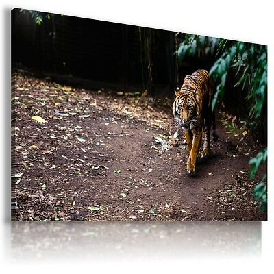 BENGAL TIGER Wild Animals Canvas Wall Art Picture Large Sizes  AN35 X  MATAGA