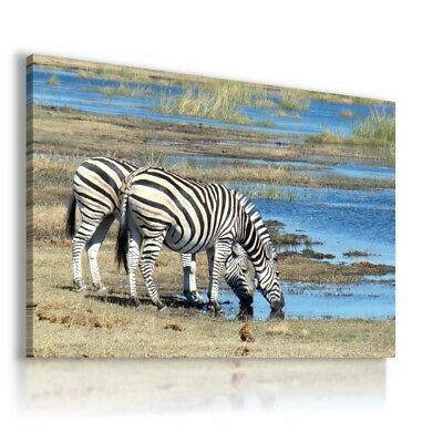 SAVANNAH GIRAFFE  Animals Canvas Wall Art Picture Large AN202 X MATAGA .
