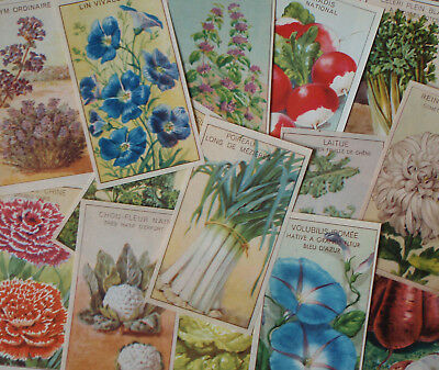 14 Different Old 1920's Lithograph Flower, Herb and Vegetable Seed Packet Labels