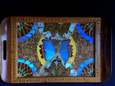 Vintage Brazil Inlaid Wood Tray Blue Morpho Butterfly Wing Glass Art Mid-Century
