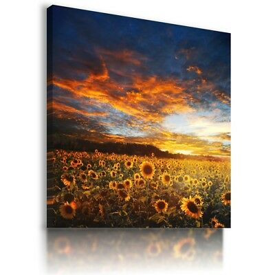 SUNFLOWER YELLOW  SUMMER Canvas Wall Art Picture Large SIZES  L533 X MATAGA .