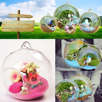 Clear Glass Flowers Plant Stand/Hanging Vase Ball Terrarium Container Home Decor