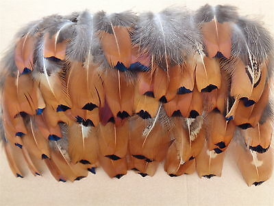 """100 Cock Pheasant Flank Feathers 2"""" to 5""""  Fly Tying  DreamCatcher"""