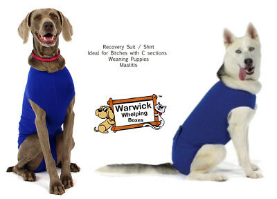 Veterinary Dog Recovery Shirt / Suit ideal Pet Surgery Weaning Puppy Mastitis