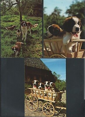 lot of 3 postcards vintage dog st BERNARD dogs
