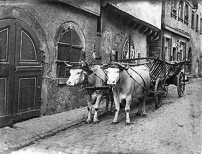 HIRSCHHORN Cattle Pulling Cart Antique Glass Plate Negative (1910s Germany)