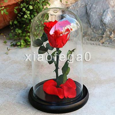 Beauty and the Beast Enchant Rose Fairy Tale Belle Glass Prop Decor Gift Canada!