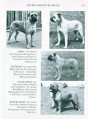 Dog Book 1996 Bullmastiff Bullmastiffs Today