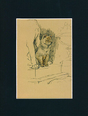 Dog Print 1934 sitting Chow Chow by CECIL ALDIN Vintage